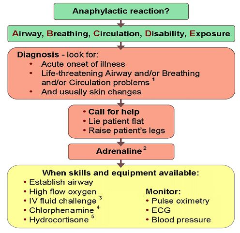 Anaphylactic Shock algorithm Anaphylactic Shock Case Study  The Impending Doom