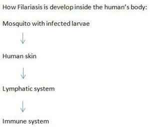 Transmission-of-Filariasis