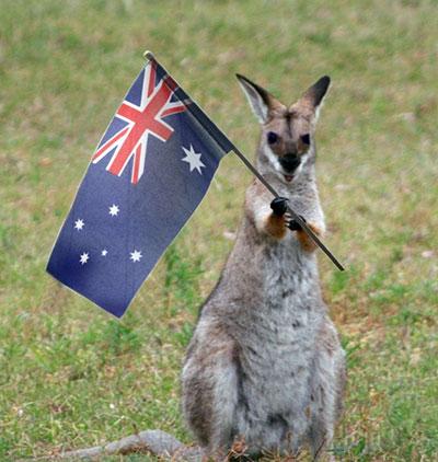 australia-kanggaro