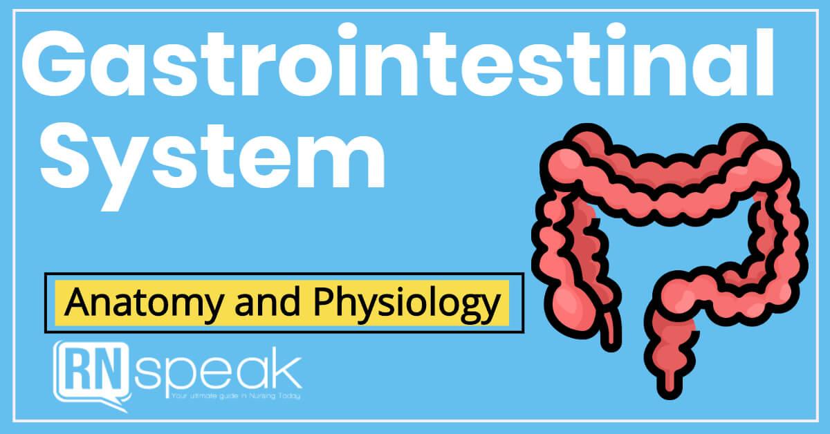 gastrointestinalsystem