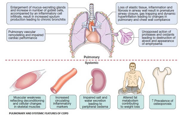 copd systemic effects