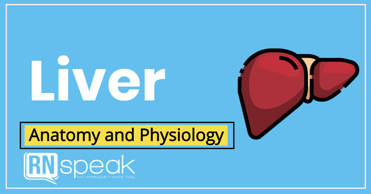 Anatomy and Physiology of the Liver