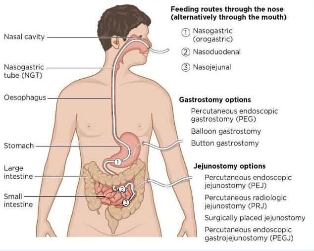 peg anatomy