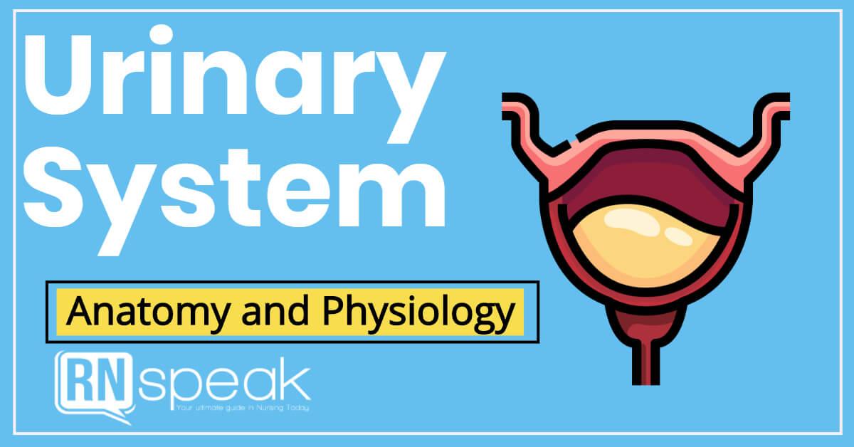 urinarysystem
